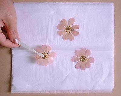 アントシアニン系赤花発色剤の使い方